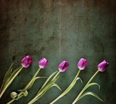 Tulips on wooden board
