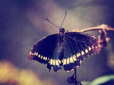 Beautiful butterfly on wild flower