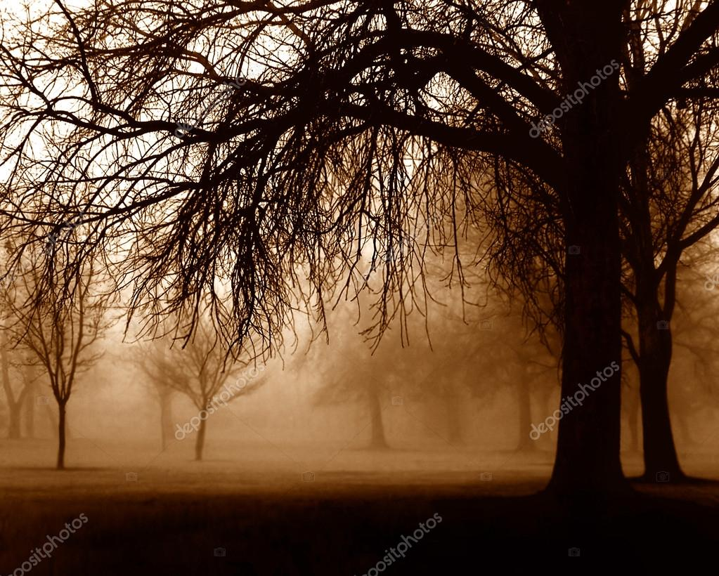 Trees in foggy forest