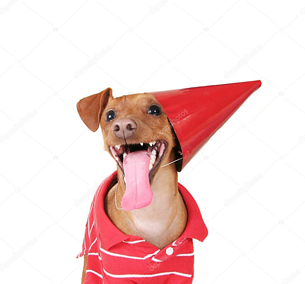 A Dog With Birthday Hat On And Red Shirt His Tongue Hanging Out Photo By