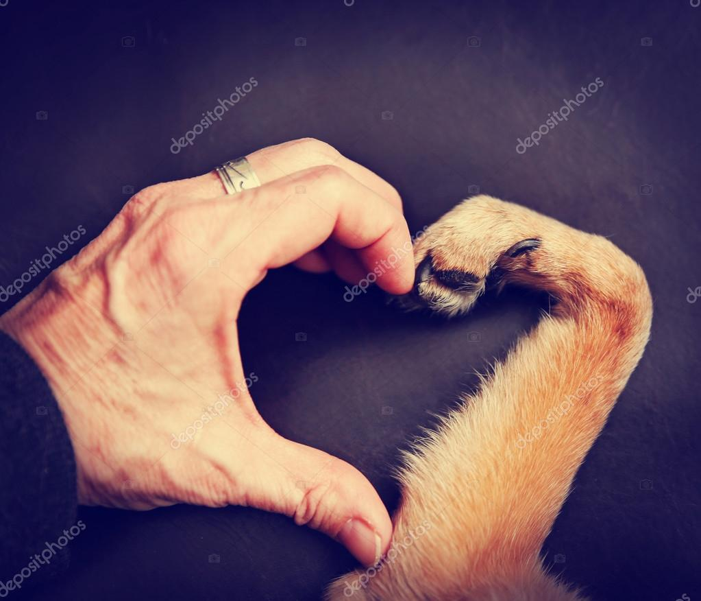 Person and dog making heart shape