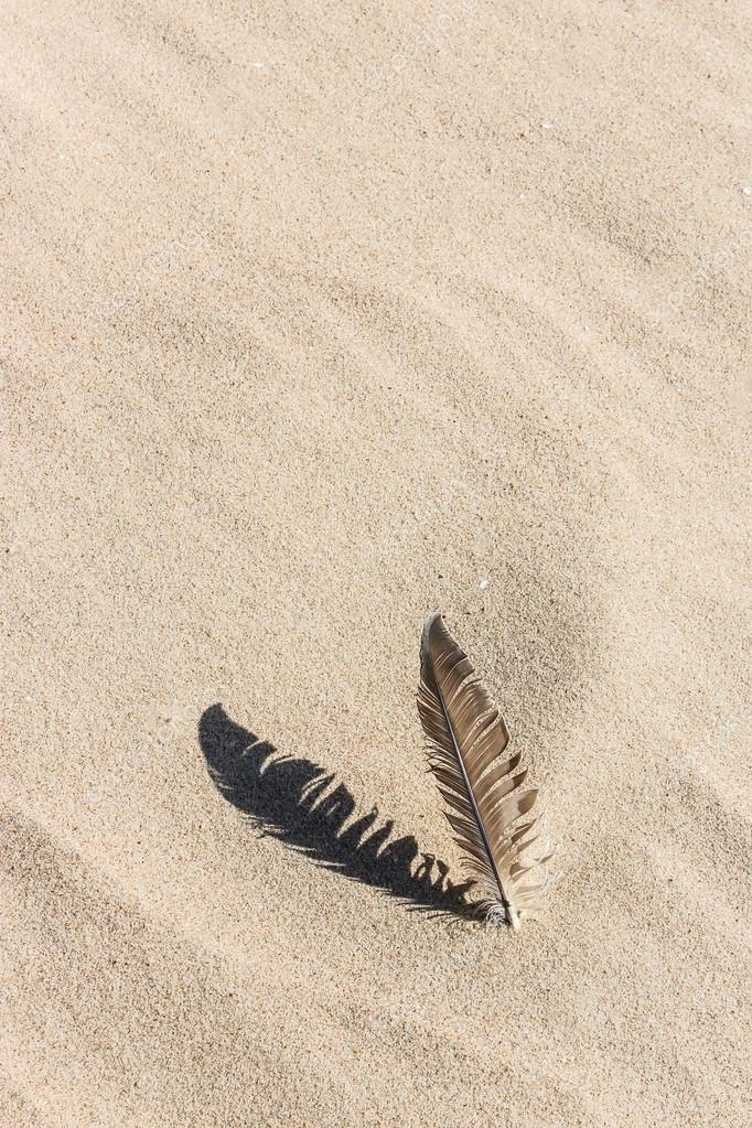 Feather laying on a sand beach casting a shadow