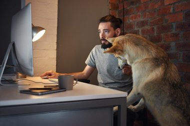 dog pet  seeking owner's attention at his desk a