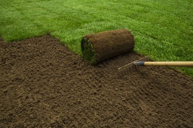 Gardener applying turf rolls
