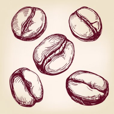 coffee beans set hand drawn vector illustration  sketch