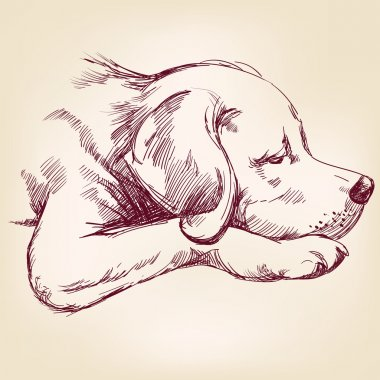 dog hand drawn vector llustration