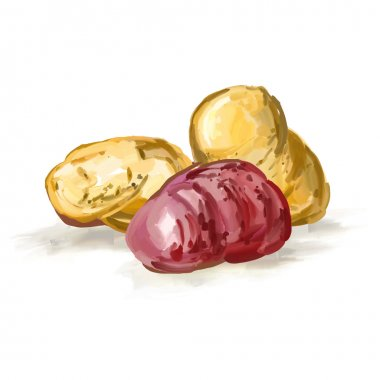 potatoes vector illustration  hand drawn  painted watercolor