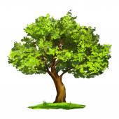 Strom vektorové ilustrace ručně kreslenou malované