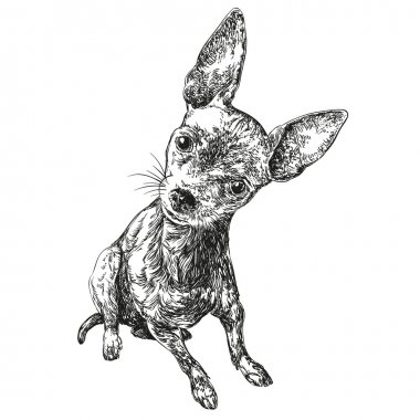 dog russian toy terrier hand drawn vector llustration realistic sketch