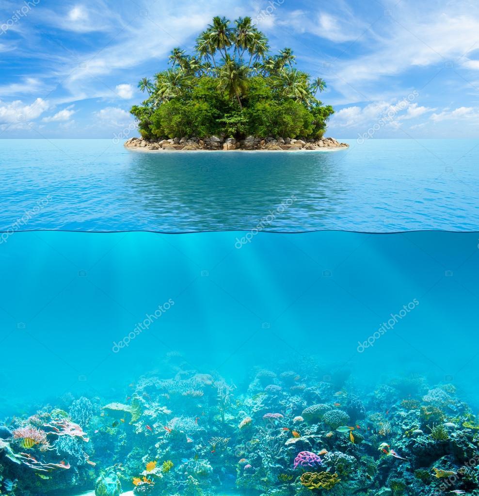 fascinantes arrecifes de coral 3d descargar