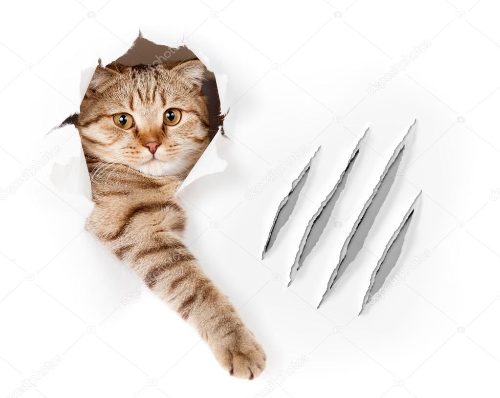 holé kočička obrázky mladí kundičky stříkat