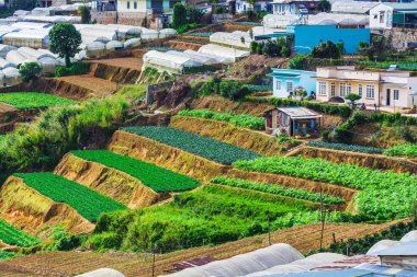 Vegetable fields and Housein highland