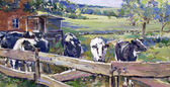 Fotografie Landschaft mit Kühen in Niedersachsen