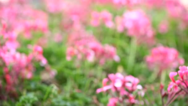Spring or summer abstract season nature background with flowers