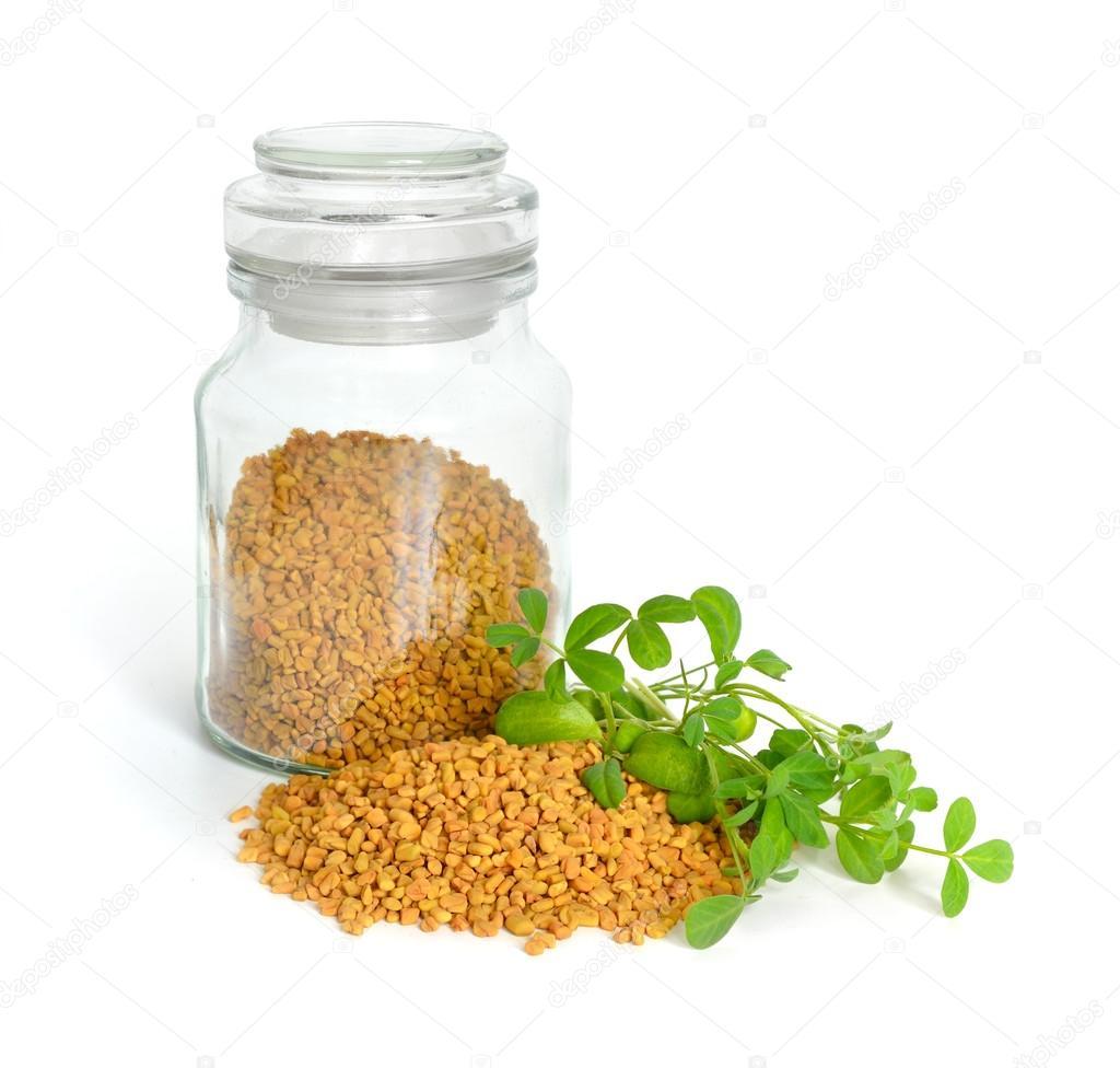 Fenugreek seed with sprout. (Trigonella foenum-graecum)