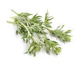 Fotografie Artemisia, Beifuß, Wermut und Beifuß