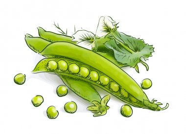 Pea pods. Vector illustration.