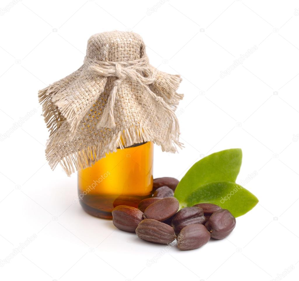 Jojoba (Simmondsia chinensis) leaves, seeds with oil.