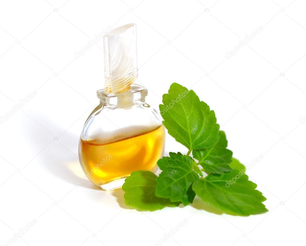 Patchouli sprig with essential oil.