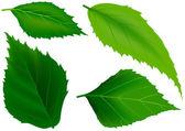 Zelené listy jako prvky návrhu