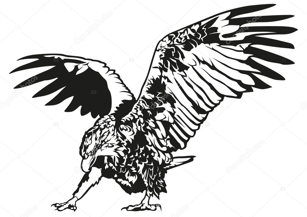 blanco y negro águila — Archivo Imágenes Vectoriales © dero2010 ...