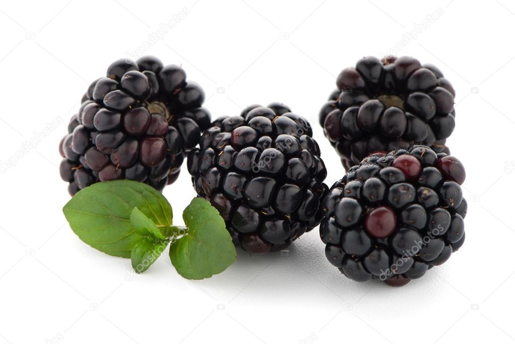 Blackberries With Leaves Isolated On White Background Photo By Homydesign