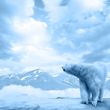 """Картина, постер, плакат, фотообои """"Арктический белый медведь, ursus maritimus"""", артикул 62590255"""