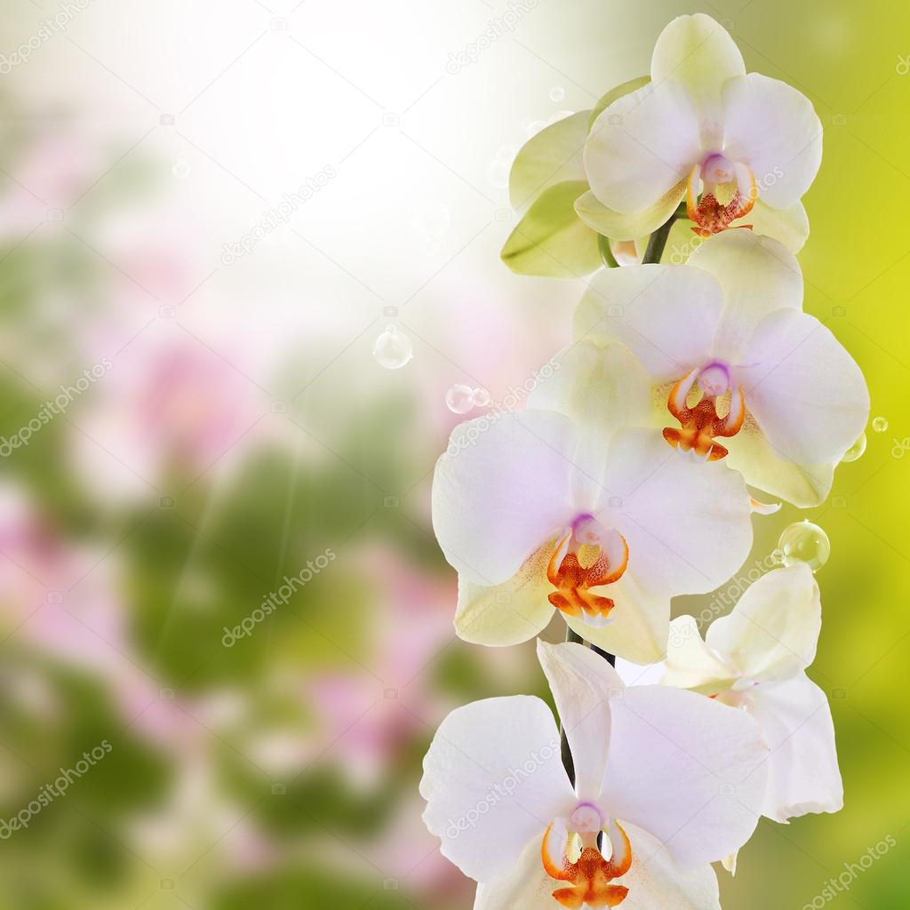 Beautiful exotic flower orchid stock photo alex150770 100859764 beautiful exotic flower orchid photo by alex150770 izmirmasajfo Images