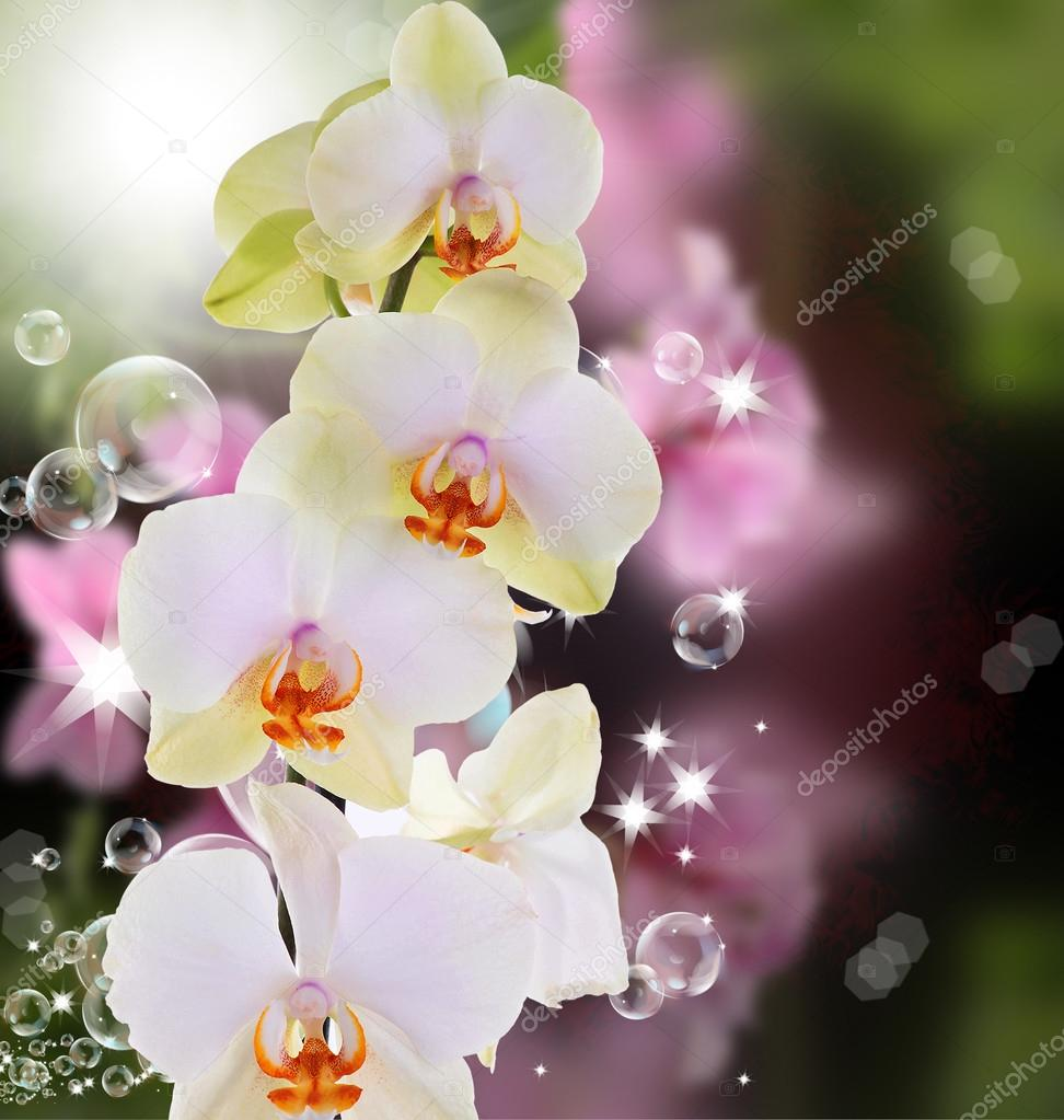 Beautiful exotic flower orchid on abstract nature background stock beautiful exotic flower orchid on abstract nature background photo by alex150770 izmirmasajfo Images