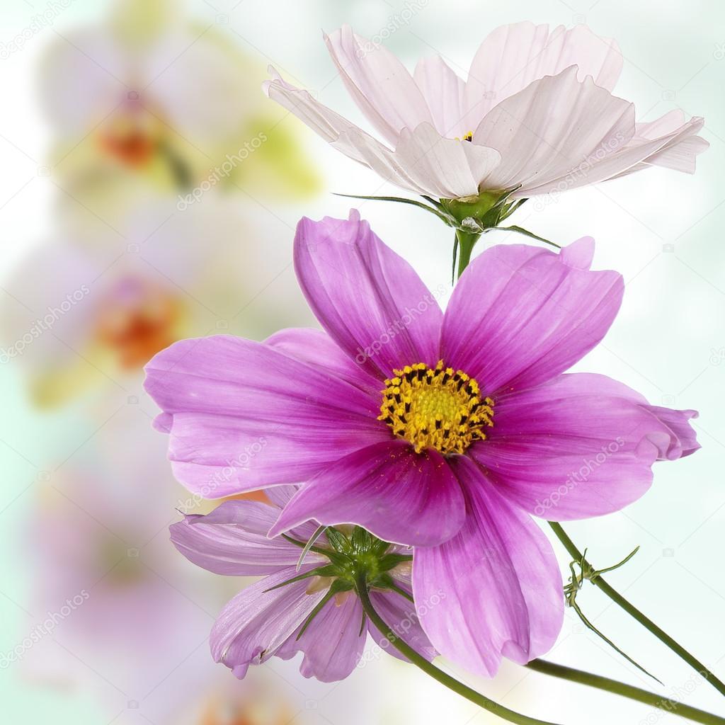 Bellas flores sobre fondo rosa claro Resumen — Foto de alex150770