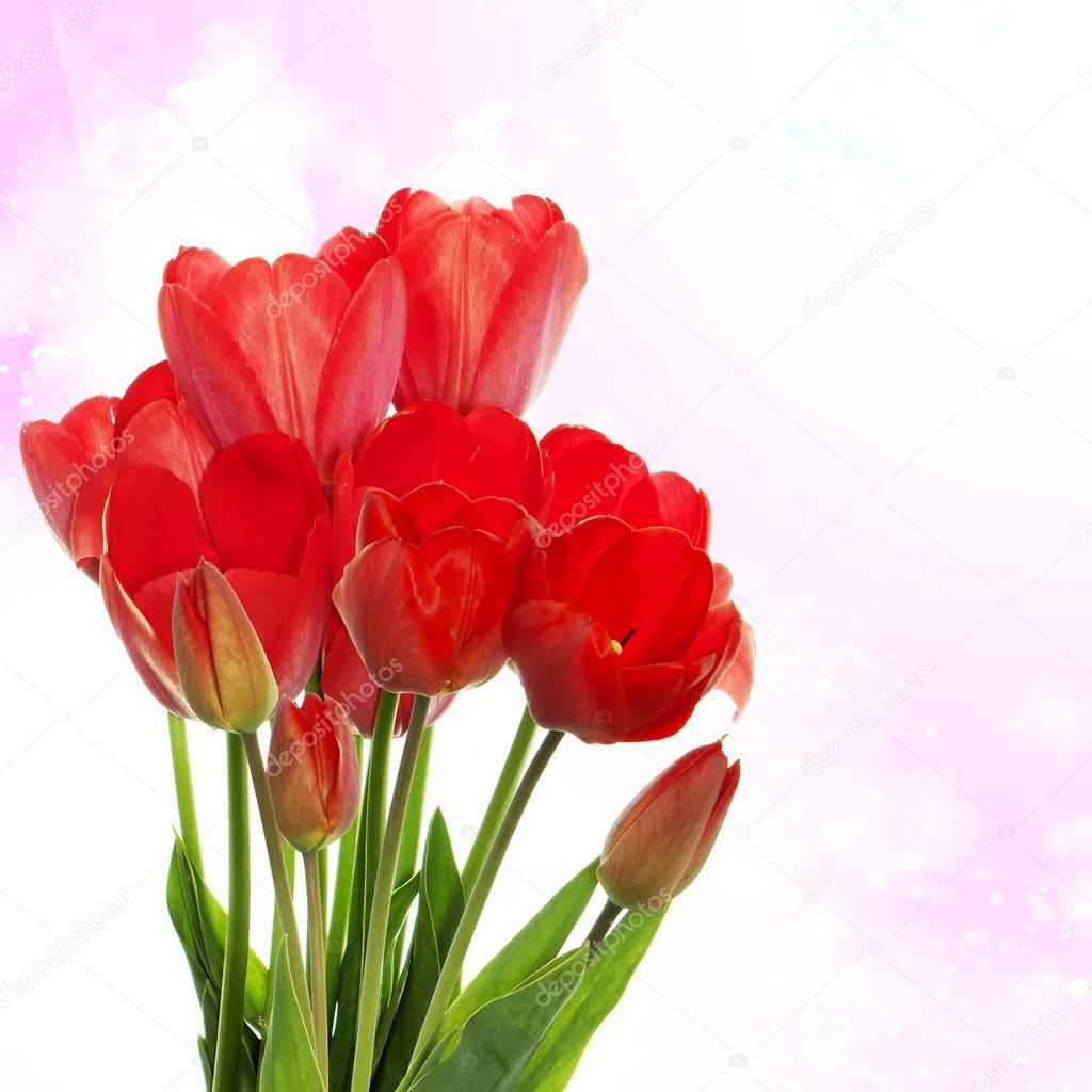 diseño de la flor hermosa fotos de stock alex150770 124511624