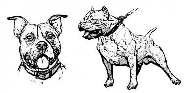 american pitbull illustration