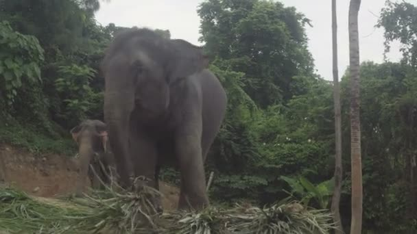 View of two elephants eating palm leaves on a hill in Phuket, Thailand