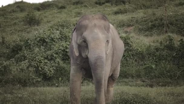 thajský slon volný nespoutaný