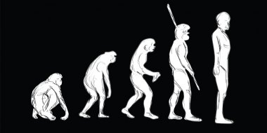 Human Evolution stages