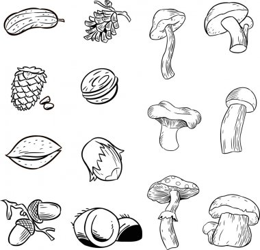 Contour nuts and mushrooms