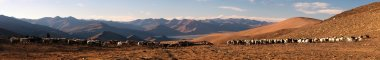 Evening panoramic view of goats and sheeps herd