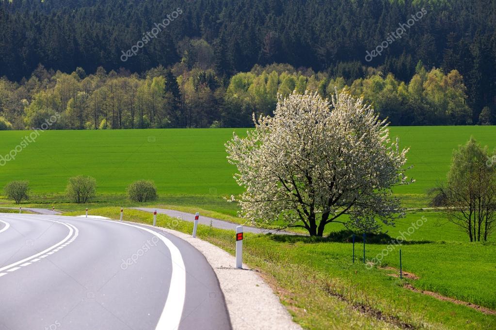 Arbre en fleurs printemps dans campagne photographie artush 109780576 - Arbre fleurs rouges printemps ...