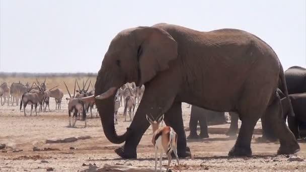 overcrowded waterhole with Elephants, zebras, springbok and orix