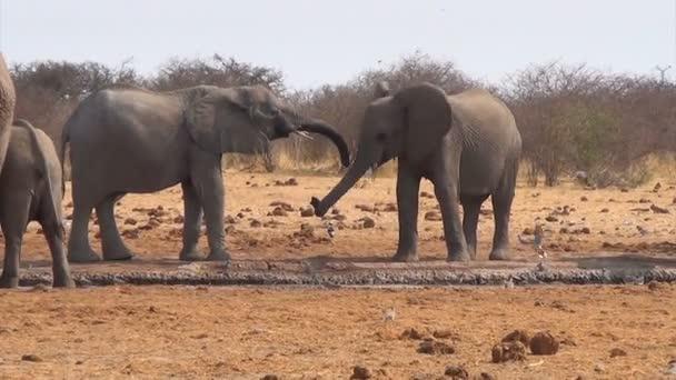 Afričtí sloni v blátivé Napajedla
