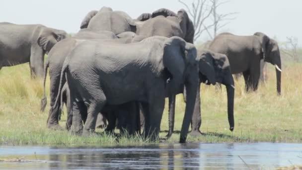 Stádo afrických slonů na Napajedla v africké buši