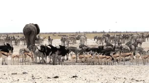 Számos állatot az Etosha például víznyelő