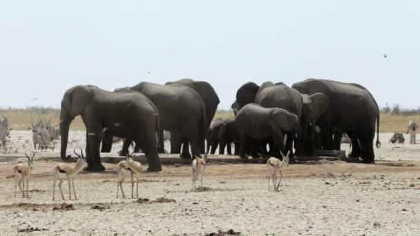 Überfülltes Wasserloch mit Elefanten, Zebras, Springbok und Orix. Etosha
