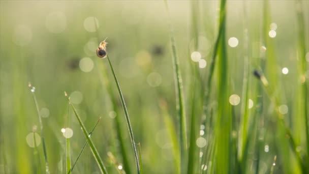 šnek na trávě při východu slunce