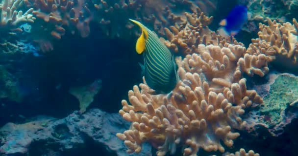 Underwater Tropical Fish and Coral Garden