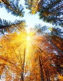 Podzimní stromy s paprsky - krásné sesonal pozadí, spadají