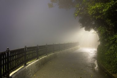 Mystery Fog in the dark park with way to light