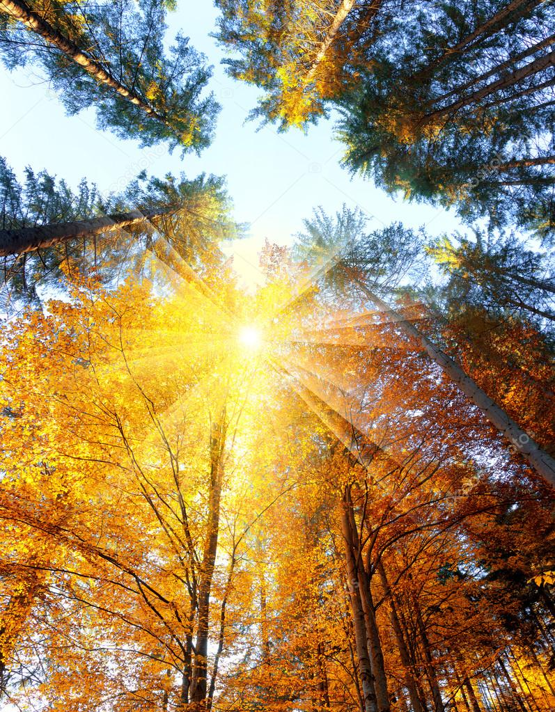 Autumn Trees with sunbeams - beautiful sesonal  background, fall