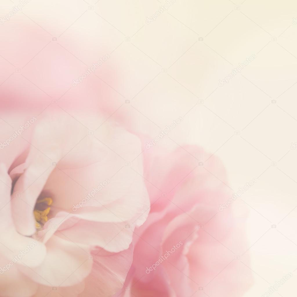 Vintage gentle flowers background