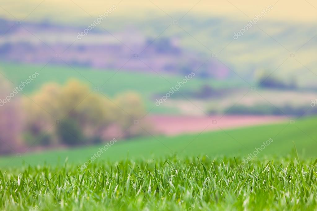 Blured Landscape background - focus on the front grass